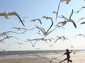 Volano, uccelli volano
