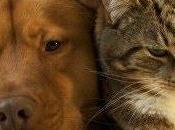 Minacce confronti degli animali,cosa fare?