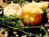 L'uovo Cracco