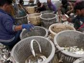 """Greenpeace: """"Stop alla pesca eccessiva, sono minaccia mari"""". Allarme tutto mondo"""