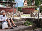 Tappa Lopburi, città delle scimmie