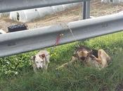 Noto: cani abbandonati ciglio della strada legati guard rail, segnalazione lettore
