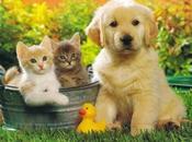 """Misteriosa Guida Invisibile Cani Gatti"""""""