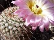 Cactus piante grasse