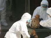 Influenza aviaria rischio epidemia Libia