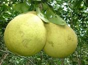 Chef Teutonico Ladies Radio Capital presentano: frullato pomelo, carota zenzero