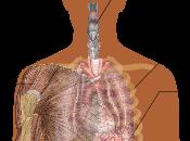VIRUS EBOLA: febbre emorragica spiegata semplicemente