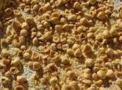 Torta nocciole (senza farina senza burro)