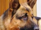 Pericoloso dormire cane? Ecco perchè