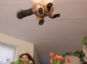 fattela risata [cute animali edition]