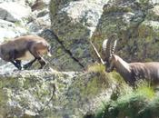 11/03/2015 Parco dello Stelvio, Legambiente: 'Stiamo perdendo grande parco nazionale delle Alpi'