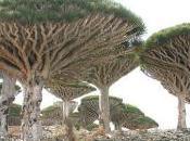 Architettura sostenibile piante belle pianeta