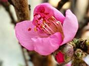 anche pesco sull'orterrazzo lapiccolacasa iniziato fiorire. primavera arrivando!!!