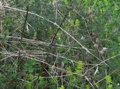 TROVATO COTTO MANGIATO asparagi