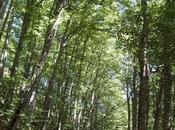 Rinascono foreste? Ripristinati breve 60milioni ettari foresta?