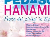 Festa ciliegi fiore Pasquetta Pedaso (Fm)