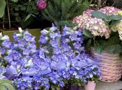 mazzo fiori cambiare vita? bottiglia delle piccole cose auguri buona Pasqua