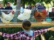 MAIRANO CASTEGGIO (pv). Weekend dedicato animali rari attività all'aperto alla Fondazione Bussolera Branca