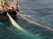 Ennesimo caso pesca illegale nell'arcipelago toscano