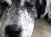 Lettera cane anziano canile