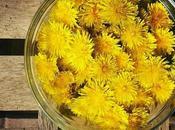 Castellane fiori tarassaco
