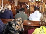 Come cane chiesa