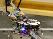 drone cervello un'ape