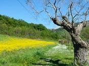 Selva Gallignà