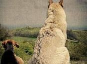 Analisi retrospettiva casistica clinica dermatite allergica cani David Bettio