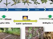 Xylella desta preoccupazione anche Brindisino, dopo alcune piante dell'agro Oria hanno mostrato segni evidenti della malatia colpisce ulivi. esperto settore riceviamo pubblichiamo.