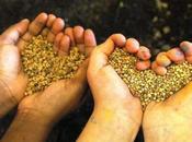 seme alla Tavola. Bambini scuola solidarietà scoperta della biodiversità