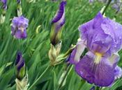 Press Tour Frantoio Pruneti precious Iris
