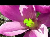 Ogni pensiero amore offrirai avvicinarti risveglio, alla pace eterna gioia infinita. Parte