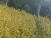 Biodiversità: parla Flora Firenze