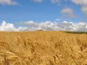 filiera della pasta toscana diretta Consorzio Agrario Siena