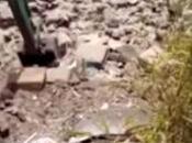 Video. Torre Greco: centinaia topi fuoriescono dalle macerie