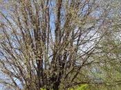 Filosofia dell'anima quercia gigante, tuoni fulmini PIOGGIA… PINETO.