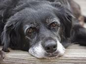 Combattere l'invecchiamento (nei cani)