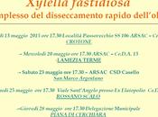 Xylella fastidiosa olivo: incontri divulgativi dell'ARSAC Calabria.