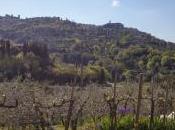 Sotto poggio Montalcino, scoprire Fuligni