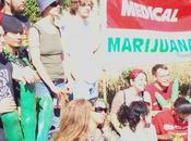 Arriva nelle farmacie cannabis terapeutica made Italy
