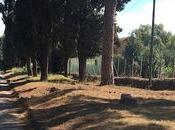 volpi dell'Appia Antica