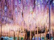 L'albero della vita insegna saggezza…