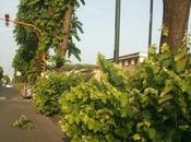 Napoli, fermata-jungla dell'autobus pista ciclabile foresta (FOTO)
