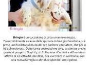 cuore arriva ovunque, Lida Olbia Collezione Cuccioli Milano