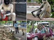 Delhi invasa dalle scimmie