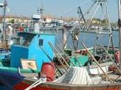Sagra pesce Gorino Goro l'Italia piatto