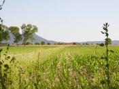 zucchine dolceforte dalla Maremma Toscana