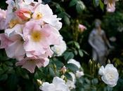 Come scegliere rose Houzz)