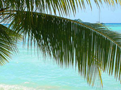 Caraibi aspetti: crociera orchestra